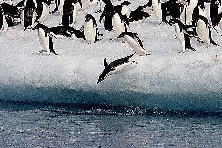228. Antarctica (Day 3)