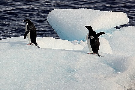 248. Antarctica (Day 3)