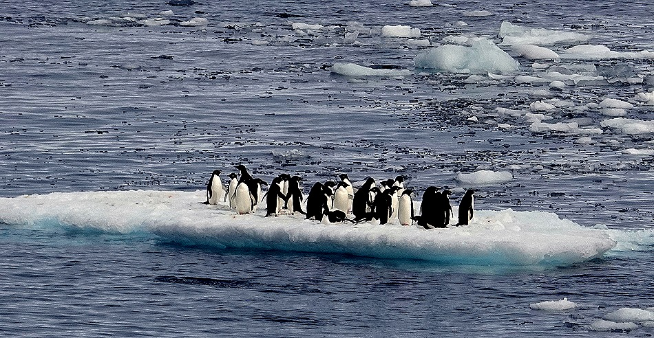 249. Antarctica (Day 3)