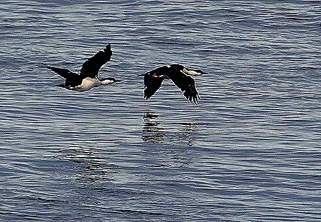 277. Antarctica (Day 3)