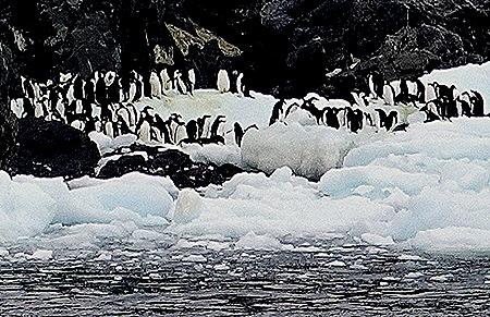 27a. Antarctica (Day 3)