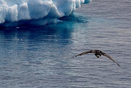 286. Antarctica (Day 3)