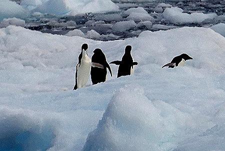 302. Antarctica (Day 3)