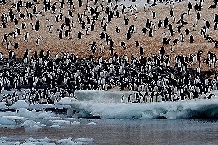 31. Antarctica (Day 3)