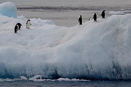 349. Antarctica (Day 3)