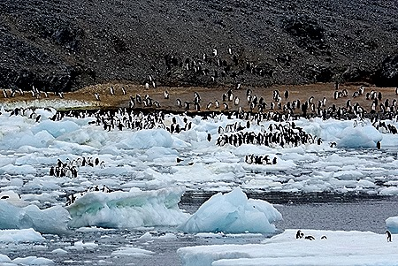 37. Antarctica (Day 3)