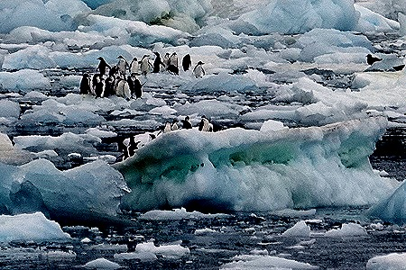 37b. Antarctica (Day 3)