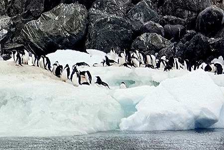 90. Antarctica (Day 3)
