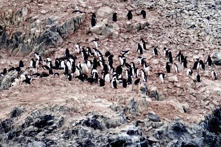 96. Antarctica (Day 3)