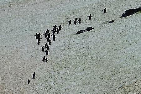 98. Antarctica (Day 3)