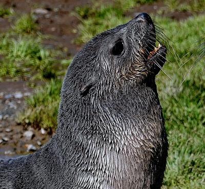 103a. Grytviken, S Georgia Island