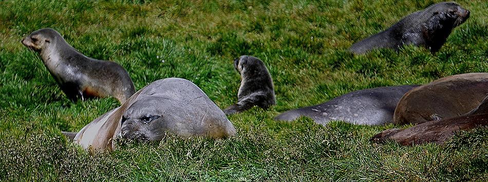 136. Grytviken, S Georgia Island
