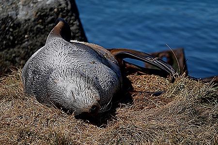 211. Grytviken, S Georgia Island