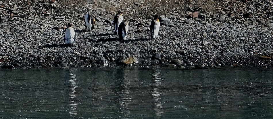 3. Grytviken, S Georgia Island