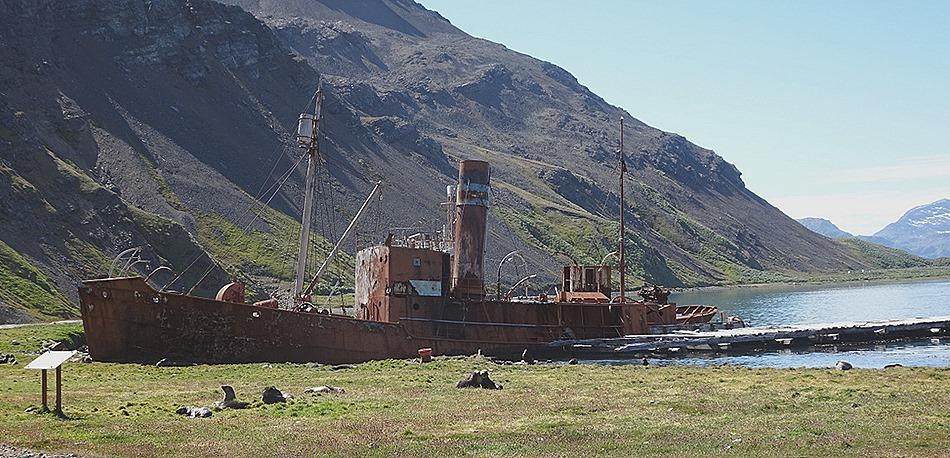 5. Grytviken Mary