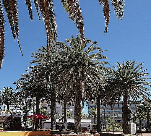 100. Punta del Este, Uruguay_ShiftN