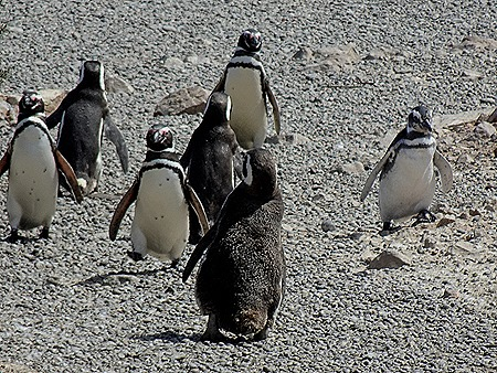 101. Puerto Madryn