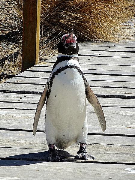 114. Puerto Madryn