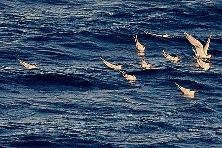 16a. Puerto Madryn