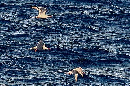 26. Puerto Madryn
