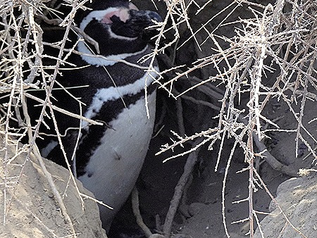 29. Puerto Madryn