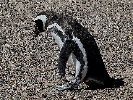 36. Puerto Madryn