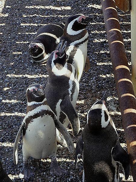 38. Puerto Madryn
