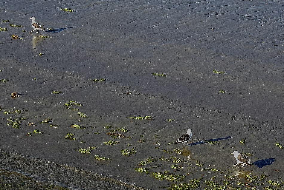 4. Puerto Madryn