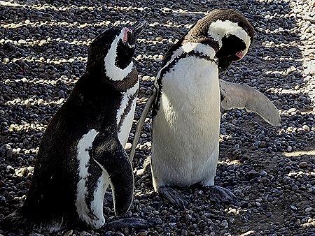40. Puerto Madryn