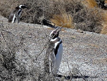 45. Puerto Madryn