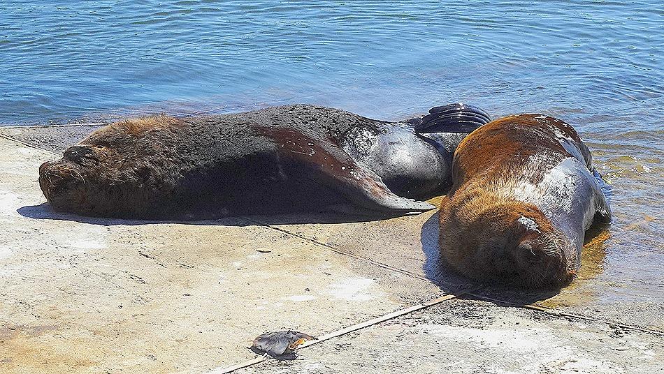 49. Punta del Este, Uruguay