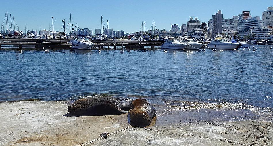 50. Punta del Este, Uruguay_ShiftN