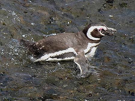68. Puerto Madryn