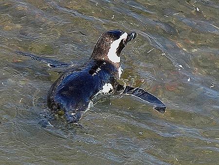 79. Puerto Madryn