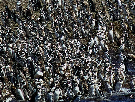 83a. Puerto Madryn