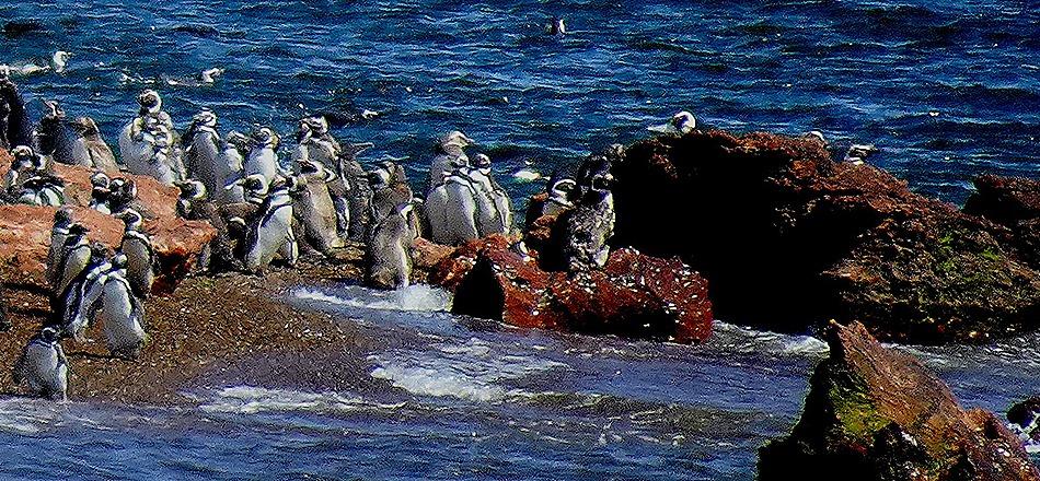 86a. Puerto Madryn