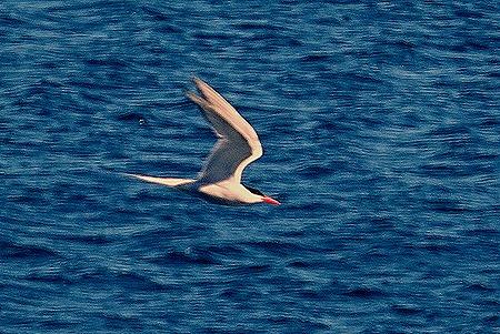 9. Puerto Madryn