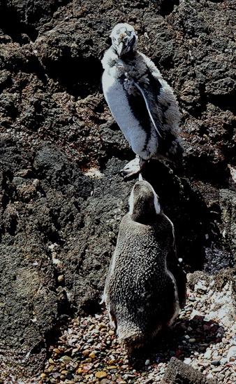92. Puerto Madryn