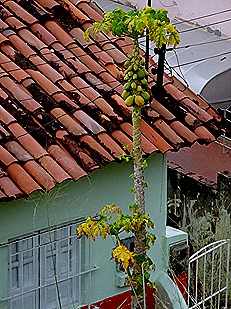 50. Recife & Olinda, Brazil