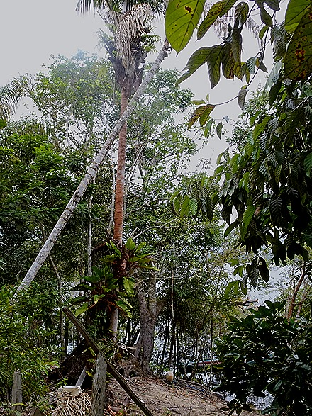 132. Manaus, Brazil (Day 2)