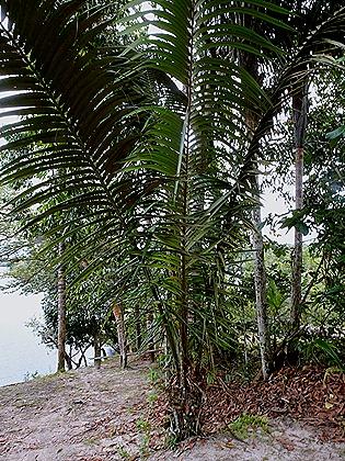 141. Manaus, Brazil (Day 2)