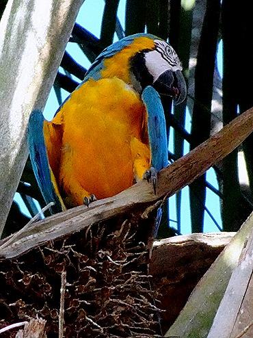 148. Manaus, Brazil (Day 1)
