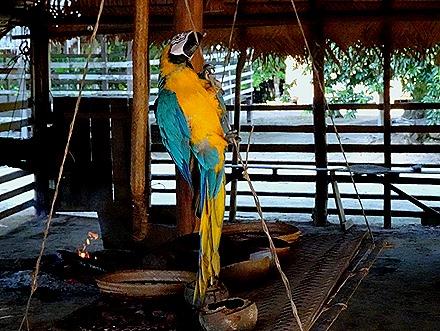 217. Manaus, Brazil (Day 1)