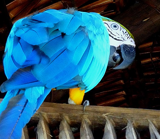227. Manaus, Brazil (Day 1)