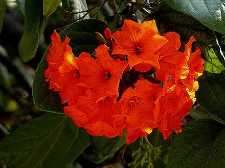 10. Orangestadt, Aruba