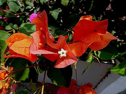 28. Orangestadt, Aruba