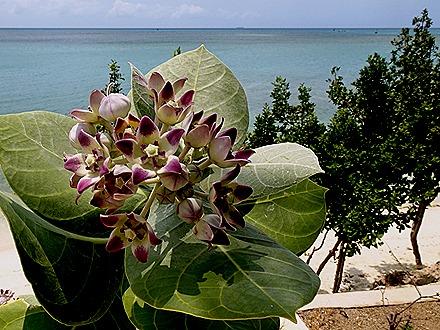47. Orangestadt, Aruba